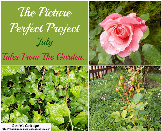 The Picture Perfect Project - July - Tales From The Garden