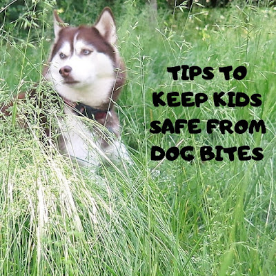 How to prevent dog bites. Teach kids to approach dogs safely and interact safely with dogs.  Kids and dogs, Children and dogs