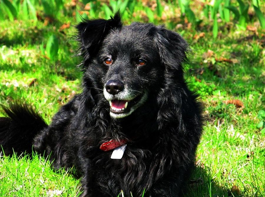 Pies - najlepszy przyjaciel człowieka