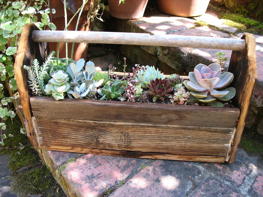 Capers And Crayons Repurposed Container Gardening