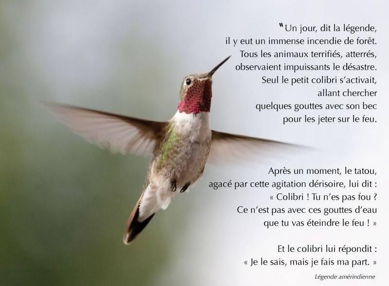 https://ticsenfle.blogspot.com/2014/08/zaz-et-la-legende-du-colibri.html