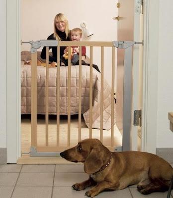 seguridad del perro