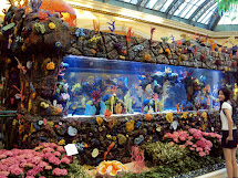 Bellagio Las Vegas Fish Tank