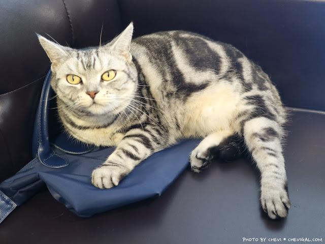 IMG 9160 - 台中北區│樂珈琲 Tano CAFE,隱藏在中友百貨後方的老宅咖啡,還有可愛店貓超療癒!