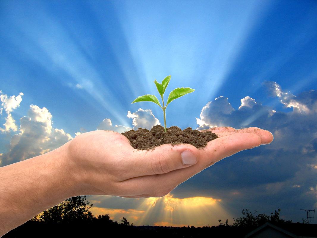 Afbeeldingsresultaat voor god zorgt voor de groei