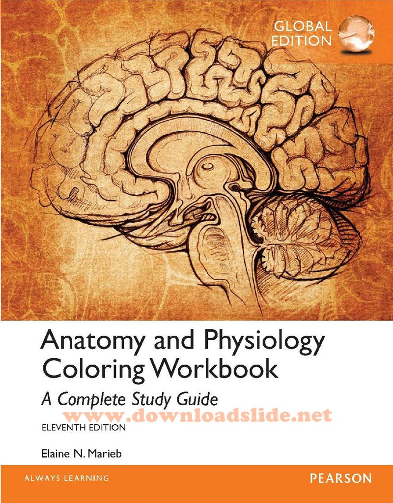 Ebook Anatomy and Physiology Coloring Workbook 11th Edition by ...
