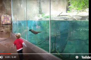 Playing with an Otter - video