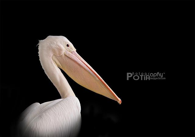 aktiviti burung di Paya Indah Wetlands