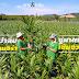 """พาชมการผลิตกล้าปาล์ม  """"โกลด์เด้นเทเนอร่า""""  ชูมาตรฐาน เข้มงวดคุณภาพ ก่อนถึงมือเกษตรกร"""