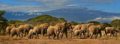Amboseli National Park Africa