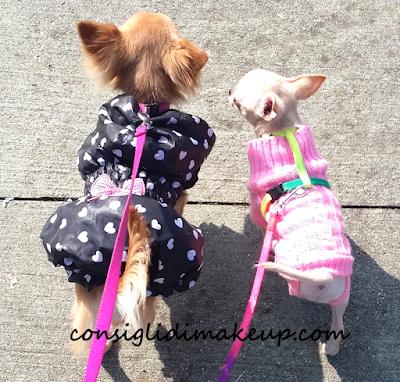 maglioncini e cappottini chihuahua