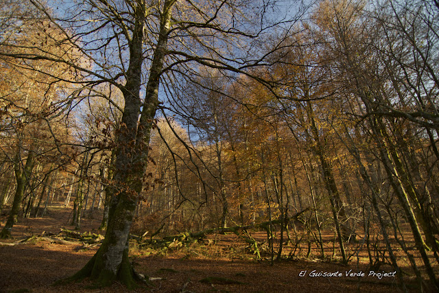 Selva de Irati, por El Guisante Verde Project