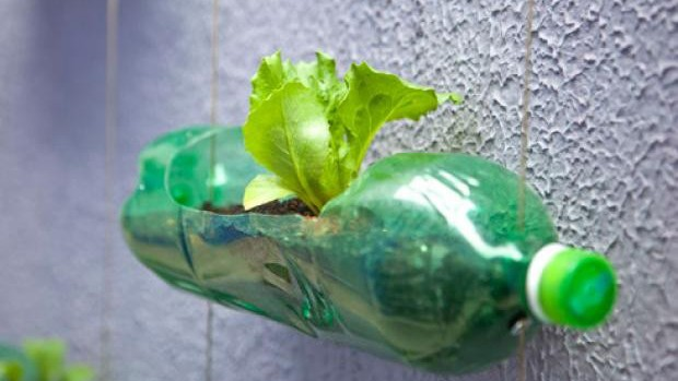 plantar em garrafa pet 1