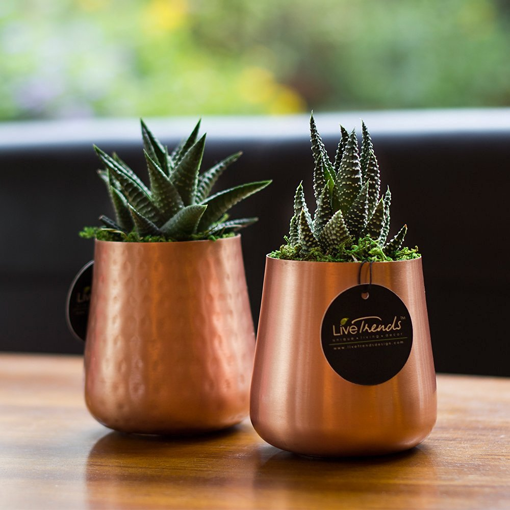 14 Ways to Display Succulents - Copper Planter