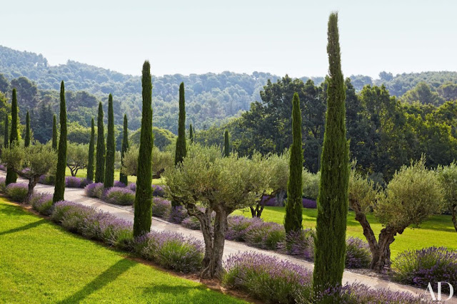 Awe inspiring landscape in Provence with cypress trees and lavender at estate of Frederic Fekkai seen on Hello Lovely