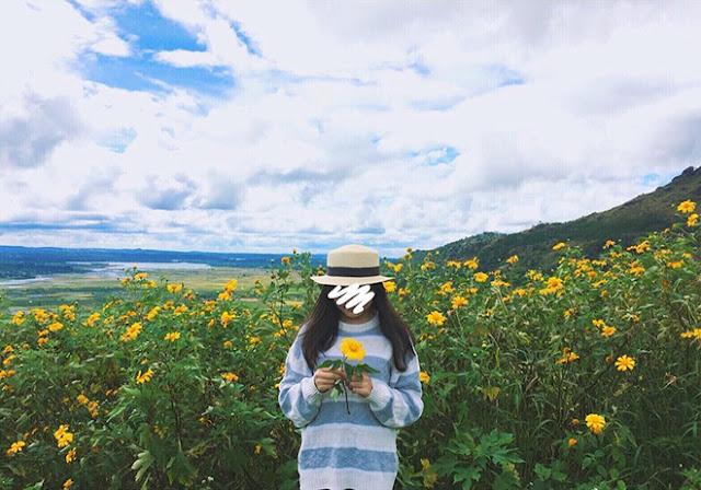 Chư Đăng Ya: Thiên đường sống ảo với hoa dã quỳ và đồi chè