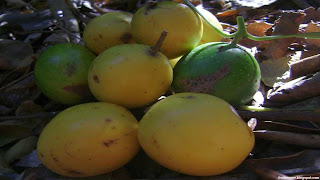 Keule fruit images wallpaper