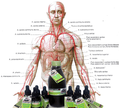 Khasiat minyak lintah bagi kesehatan