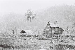 rumah tempo dulu di sumatera barat tengah sawah