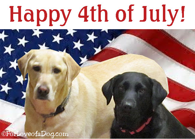Happy 4th Of July From For Love Of A Dog And Talking Dogs. Wishing ...