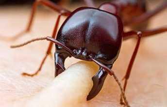 Inilah Serangga Paling Berbahaya Yang Pelu Kamu Ketahui