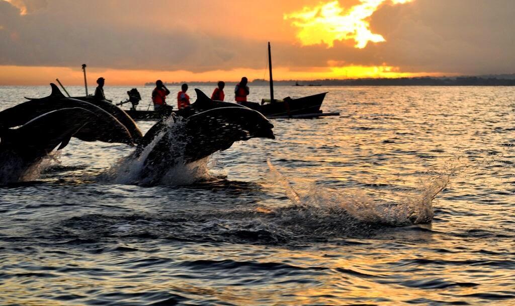paling menyenangkan di pantai - melihat atraksi lumba-lumba
