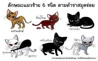 แมวไทยโบราณ : แมวร้ายให้โทษ (6 ชนิด)