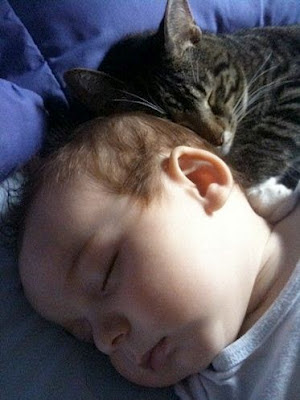 Is there compatibility between cats and babies?