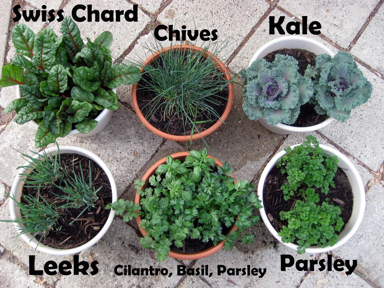 Very best Karis' Kitchen | A Vegetarian Food Blog: Container Gardening CT78