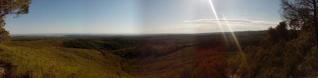 Vista del pinar desde la Palomera