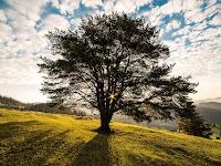 Makna Pohon Bagi Kehidupan