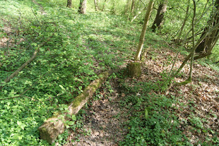 Ein Trampelpfad führt durch den Wald