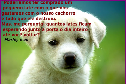 Frases Amor Incondicional Animal
