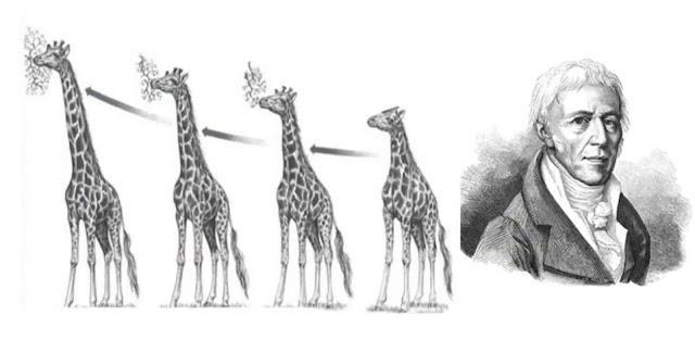 Teori Evolusi Lamarck