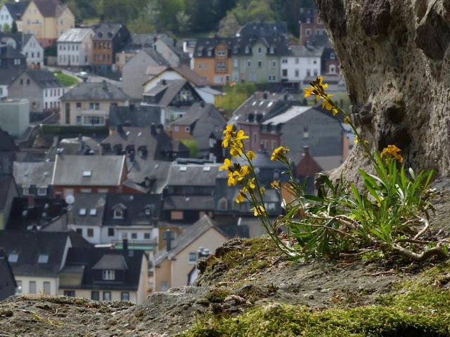 Hunsrück Urlaub Wanderurlaub mit Hund Ostern Traumschleifen Saar-Hunsrück-Steig Idar-Oberstein