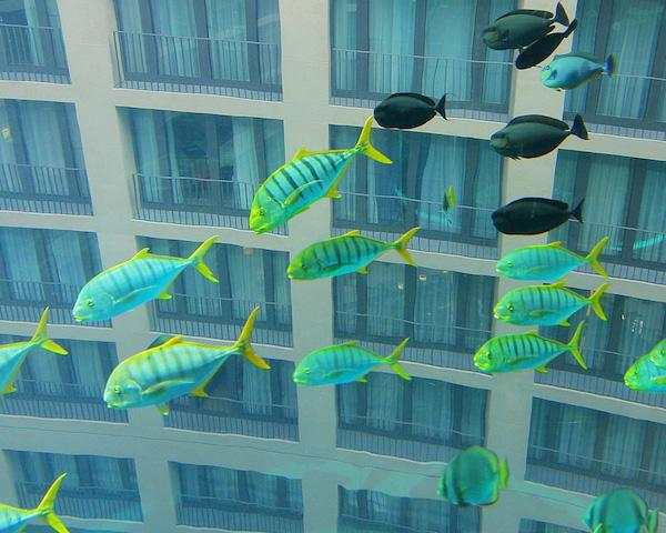 Peixes do AquadDom em Berlim