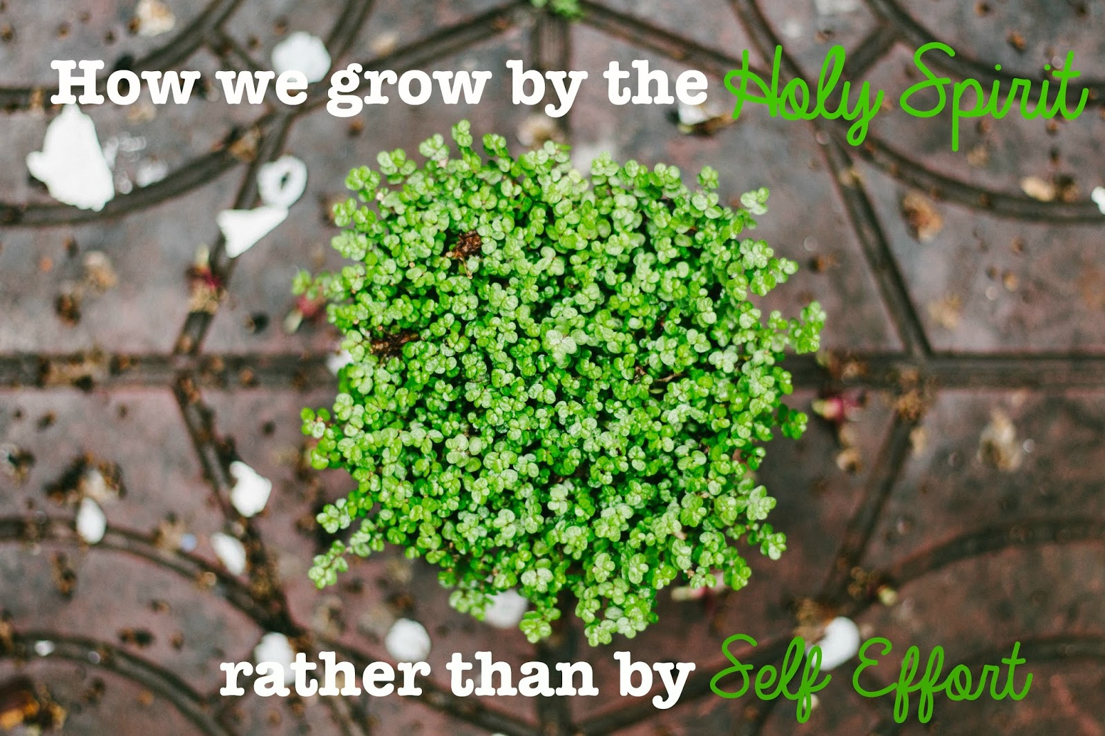 Grace Covers Me How Do We Grow By The Holy Spirit Rather