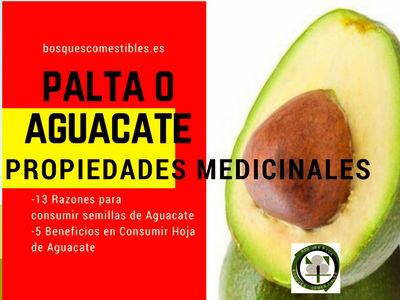 Palta o Aguacate, Propiedades Medicinale, 13 razones para consumir la semilla y 5 beneficios para consumir la hoja