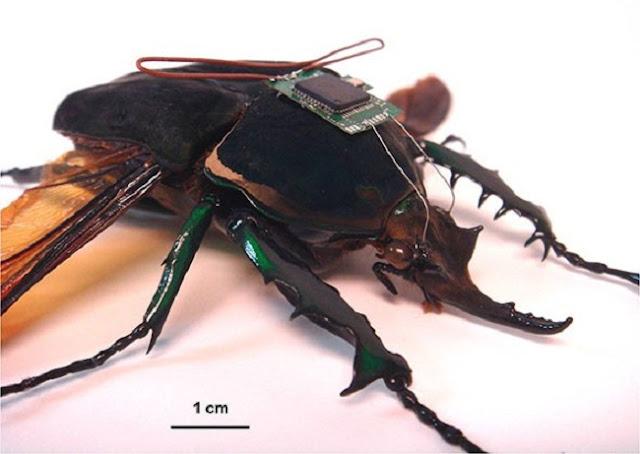 HI MEMS senjata serangga hibrid buatan Amerika Serikat