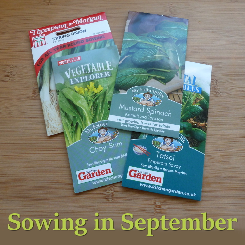 Seed packets for things sowing in September