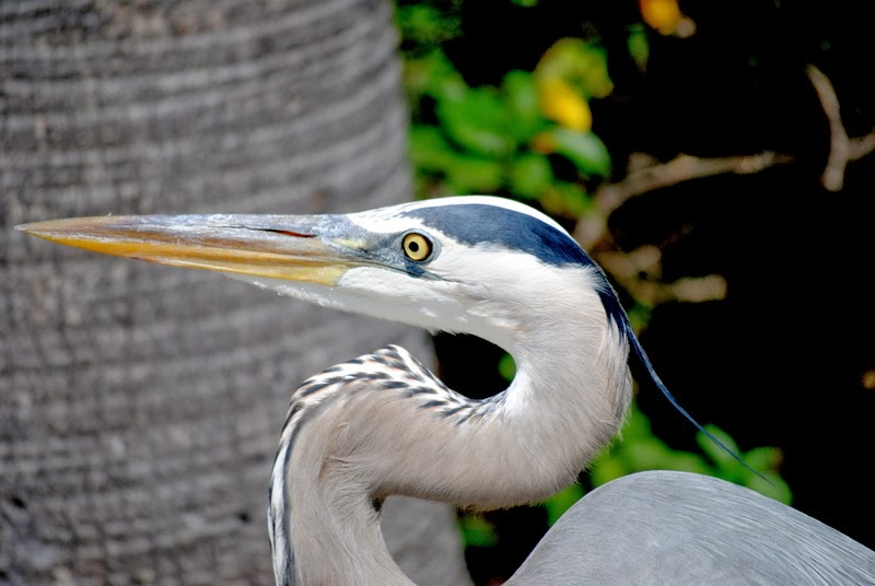 Herons Close Up!