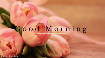 nice morning