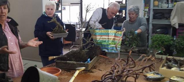 Bonsai Bilbao y cursos de bonsai en bizkaia