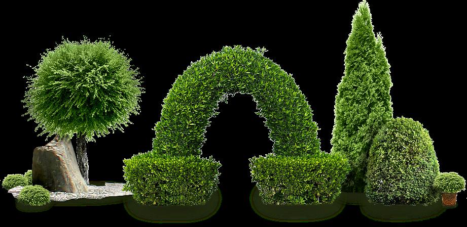 зеленые ветки фото