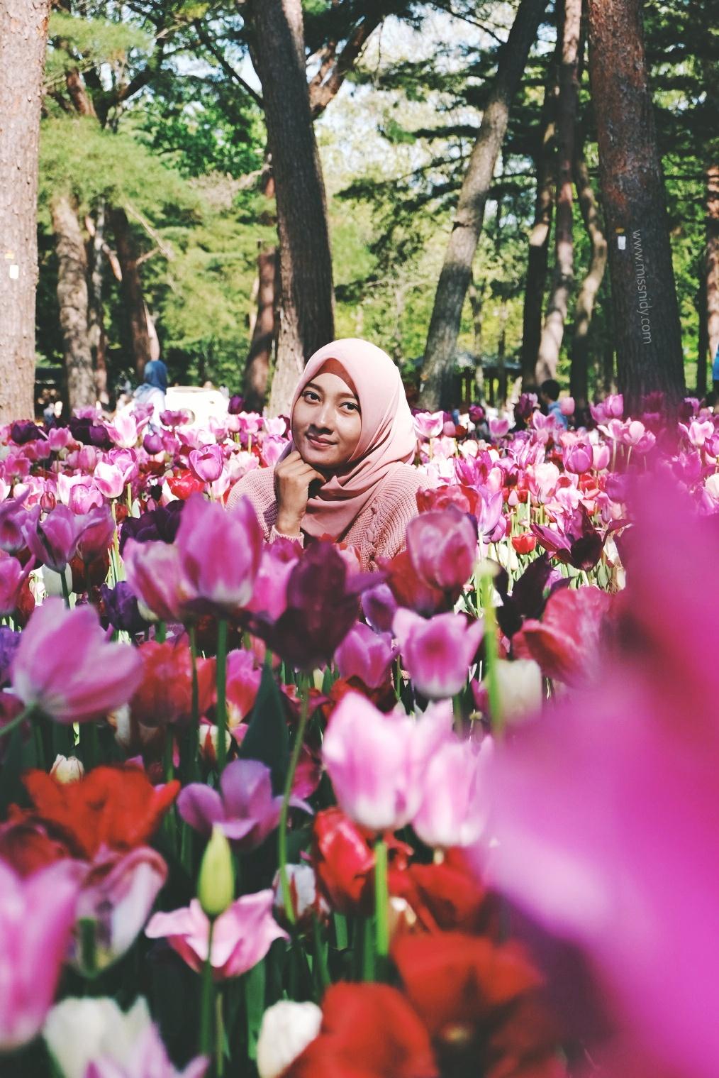 foto tulip di jepang