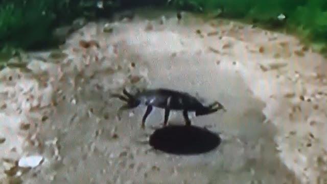 La criatura filmada en Oregón, ¿será real?