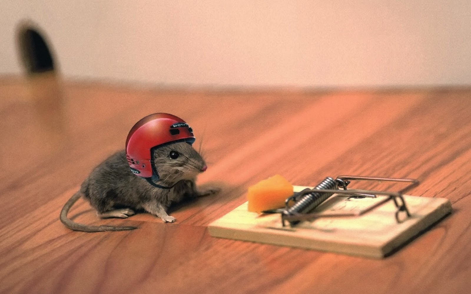 mice-with-helmet-funny-image-for-kids-and-toddlers.jpg