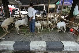 Pemkot Bandung Larang Pedagang Kurban di Trotoar