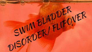 flipover-goldfish