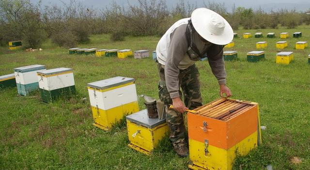 Συμφέρει να πάρω λίγες κυψέλες να βγάζω το δικό μου μέλι για το σπίτι: Πόσο μέλι βγάζει μια κυψέλη; Τι τιμή έχει ένα μελίσσι;